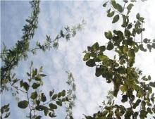 Castellanus cloud over wintry day in Karachi