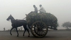 Horse cart on a foggy day