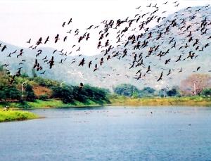 Kashmir - Birds fly over worldly heaven