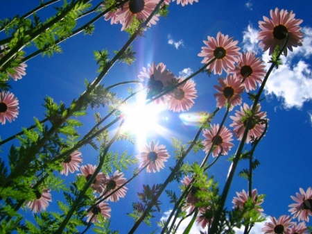 Flowers shine during the heatwave