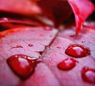 The infamous blood rain – Sky bleeds as red rain falls!