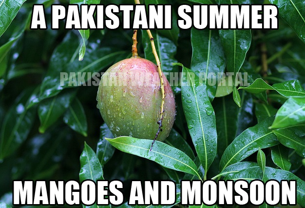 mango-monsoon