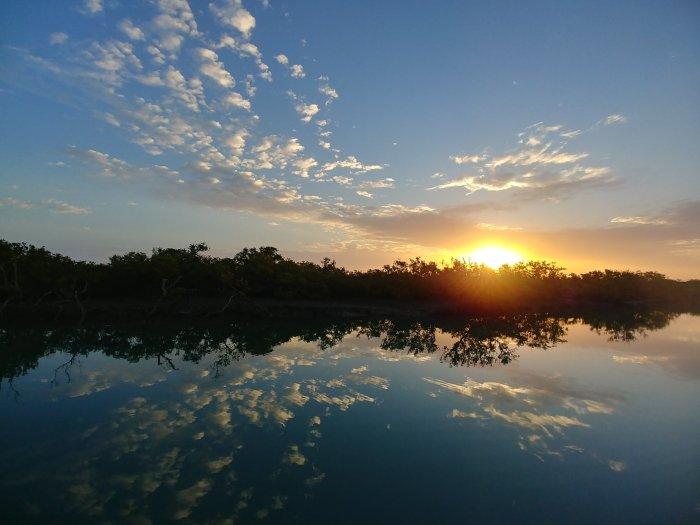 Karachi mangroves 1